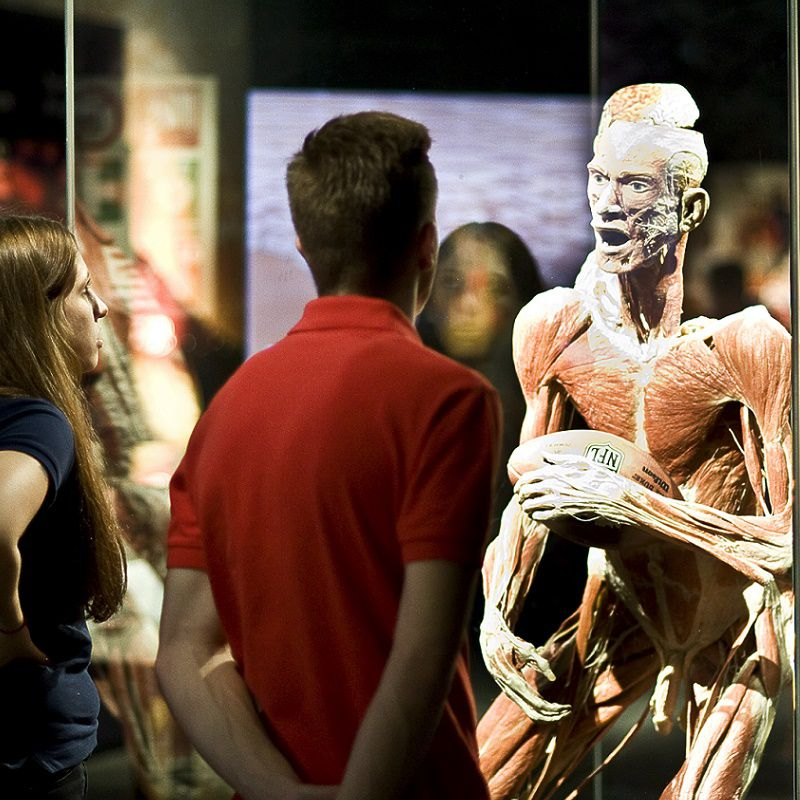 004c_attractions_tt_body_worlds_amsterdam_3.jpg
